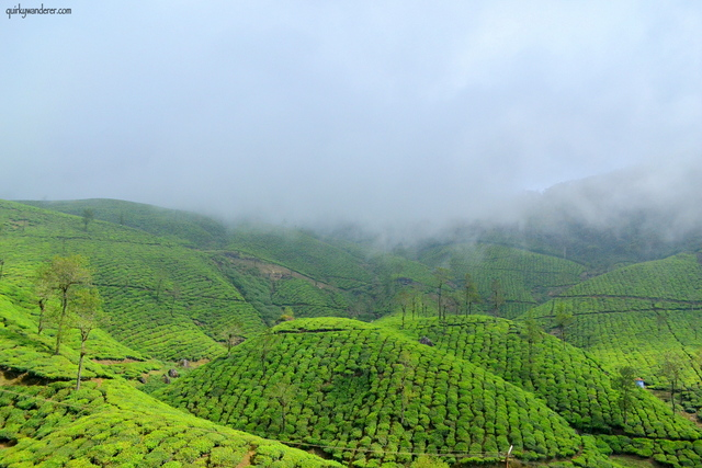 Mist over Valparai in Tamil Nadu
