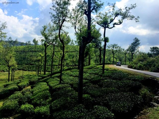 Tea gardens of Valparai in Tamil Nadu