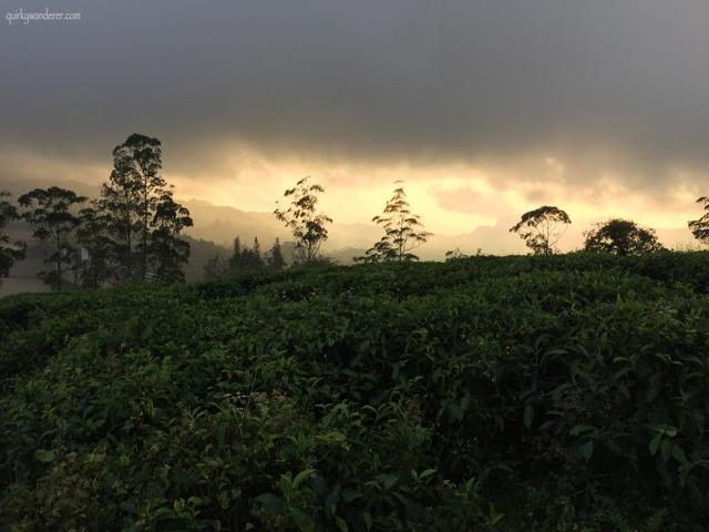Tea gardens in Valparai in Tamil Nadu